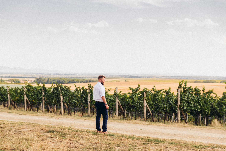 stratený vo vinici
