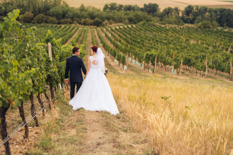 prechádzka po vinohrade