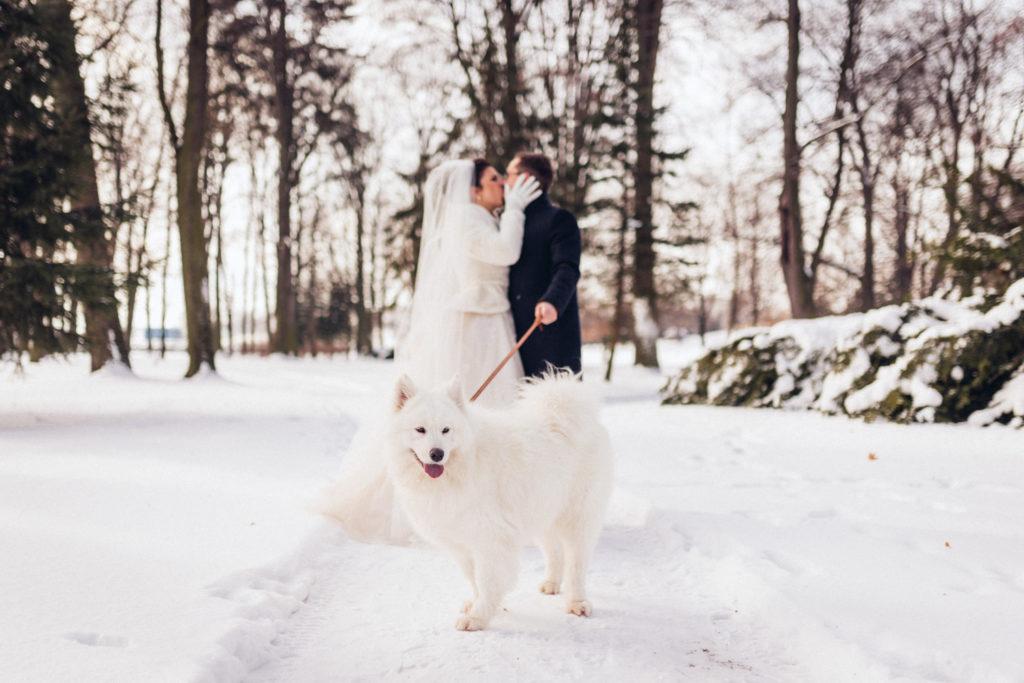 pes na svadbe
